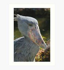 Shoebill Stork II at Lowry Park Zoo Art Print