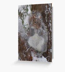 Snowy squirrel Greeting Card
