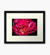 edgy double delight rose Framed Print