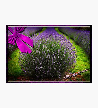 Postcard from Aloomba Lavender Photographic Print