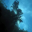 Beams at Mbili by Reef Ecoimages