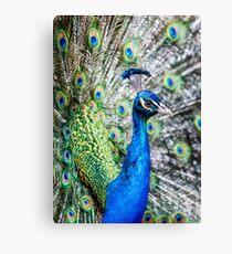 Resident Peacock Canvas Print