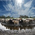 Steers and Clouds by adbetron
