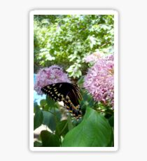 Giant Swallowtail Butterfly in profile Sticker
