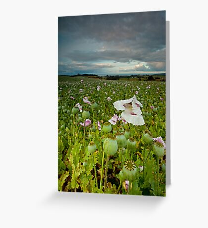 Weather Beaten Poppies Greeting Card