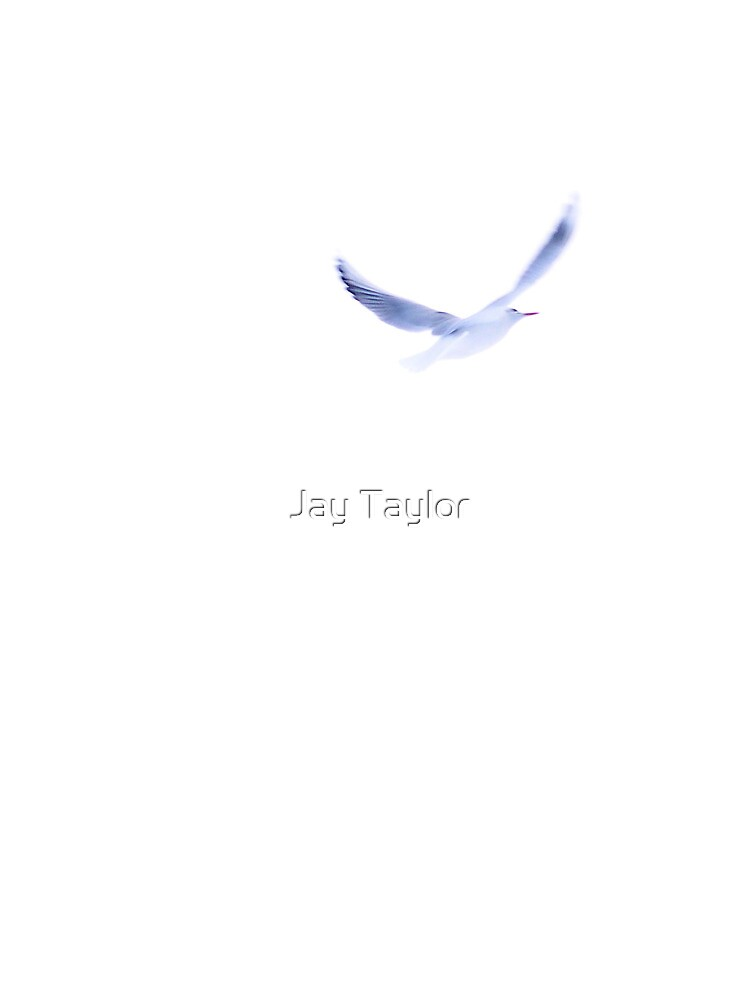 The Freedom of Flight by Jay Taylor