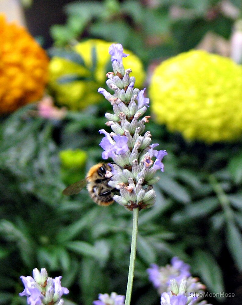 Lavender Flower and Bee with French Marigolds by BlueMoonRose