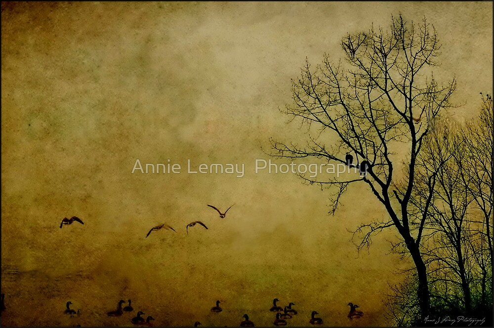 Resting Point by Annie Lemay  Photography