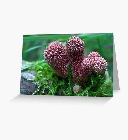 Pink Puffballs Greeting Card