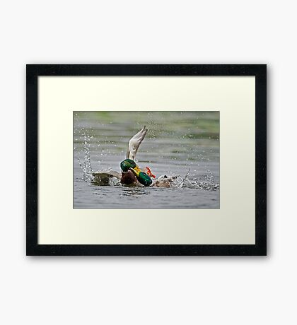 Water Foul  Framed Print