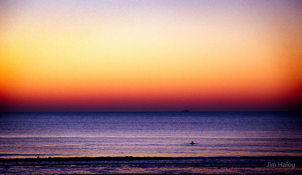 Lone Porpoise by Jim Haley