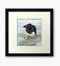 labrador love Framed Print