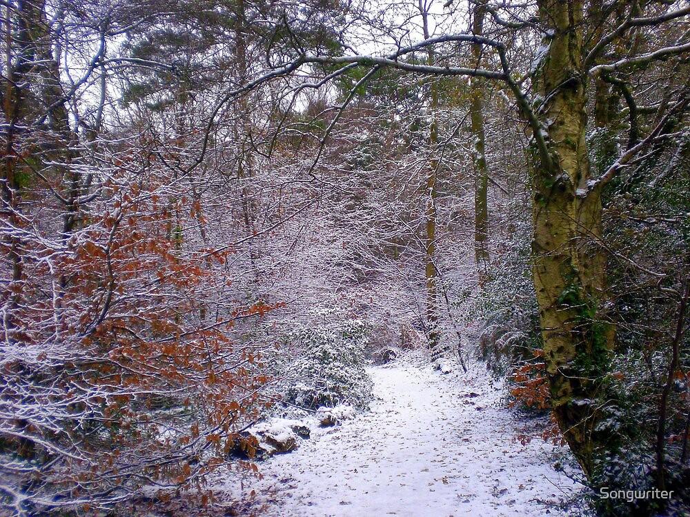 Winter Wonderland, Upton Woods, Poole by Songwriter