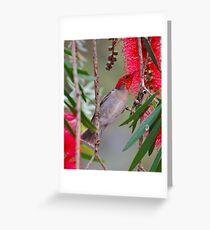SC ~ WO ~ HONEYEATER ~ Scarlet Honeyeater by David Irwin 220919 Greeting Card