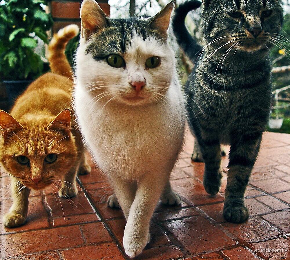 Top Cats - part 2 by aciddream