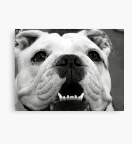 Butch the Bulldog Canvas Print