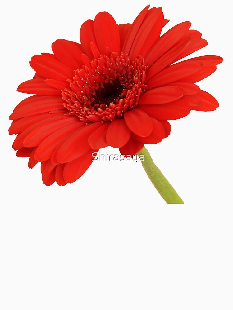 Red Gerbera Daisy by Shirasaya