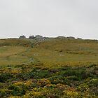 Dartmoor Seen From Natworthy Gate by lezvee