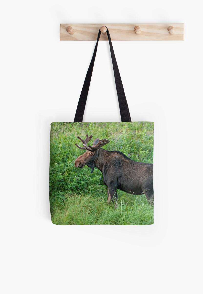 Young Bull Moose by Bill Maynard
