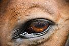 Amber Eye by Brian Edworthy