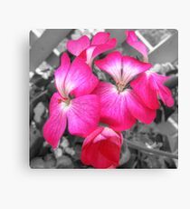 simply pink Canvas Print