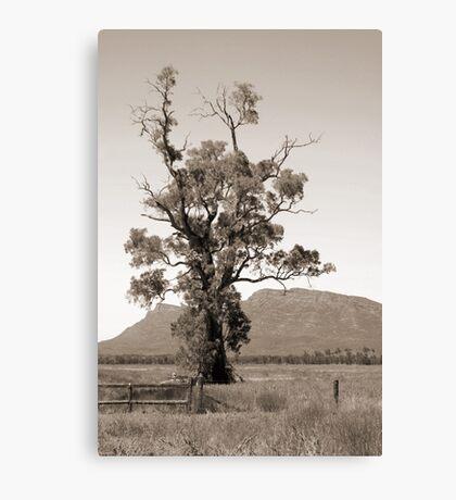 The Cazneaux Tree Canvas Print