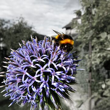 Bumble Bee on Globe Thistle by tartanphoenix