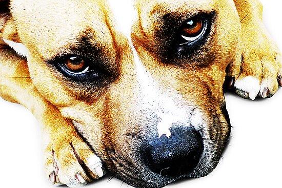Bull Terrier Eyes by Michael Tompsett