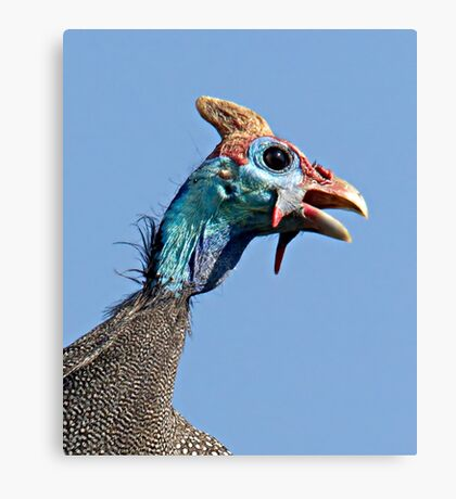 Helmeted Guinea Fowl Canvas Print