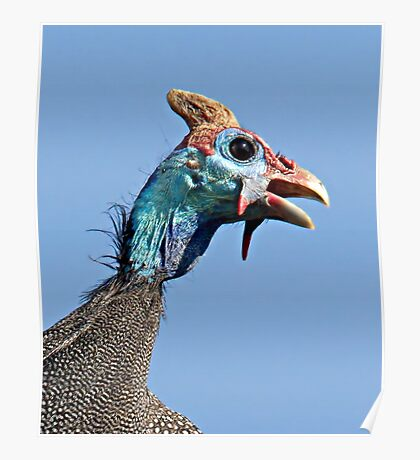 Helmeted Guinea Fowl Poster