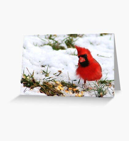 BLUSTERY DAY Greeting Card