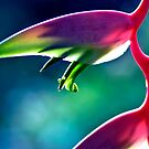 Sexy Pink - heliconia flower by Jenny Dean