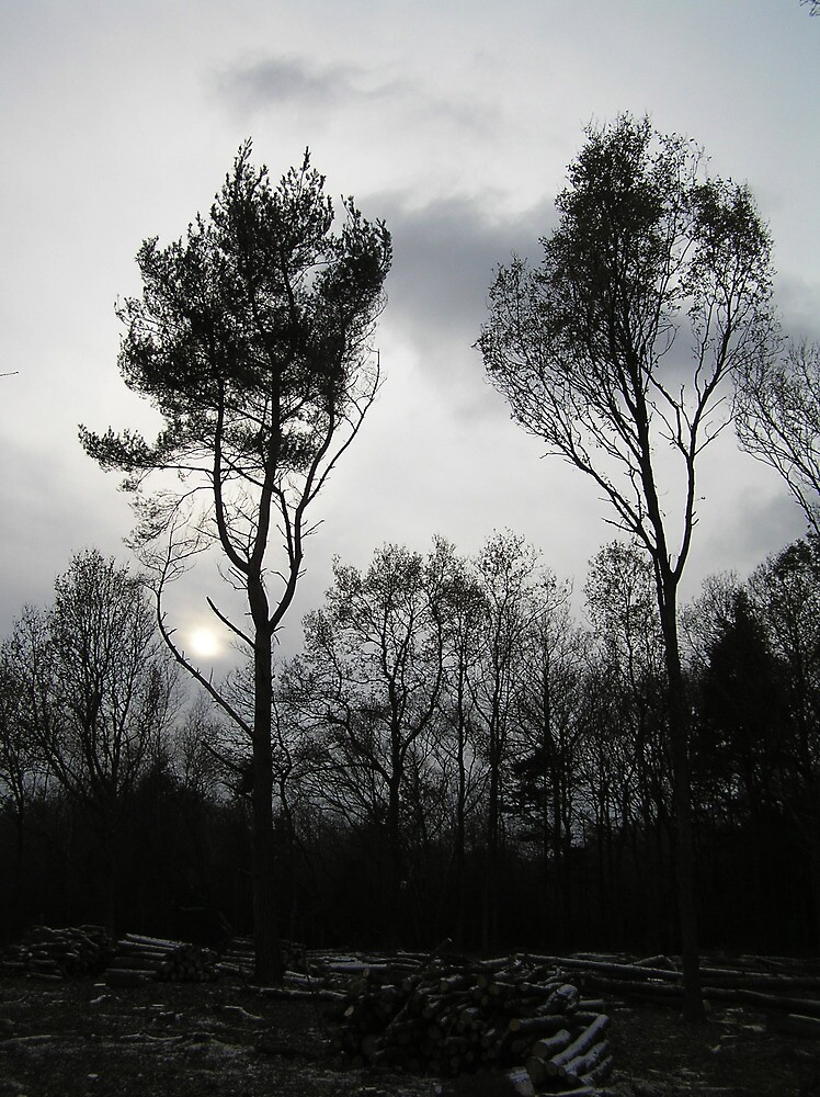 Two trees by Alien Banana