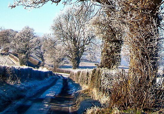 Country Lane by Trevor Kersley