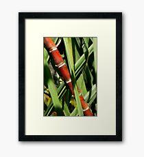 Red Bamboo Framed Print