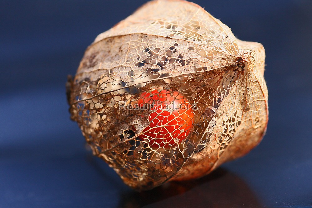 Physalis by RosiLorz