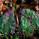 Tide Pool Tentacles by axalle