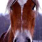 Horse in the Snow by Esherpah