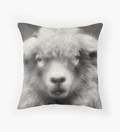 Sheepish Looks Throw Pillow