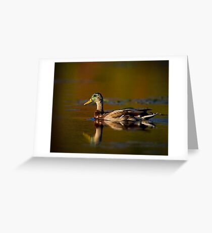 Cross-dressed Duck Greeting Card
