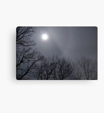 Annoyance turned Beauty Metal Print