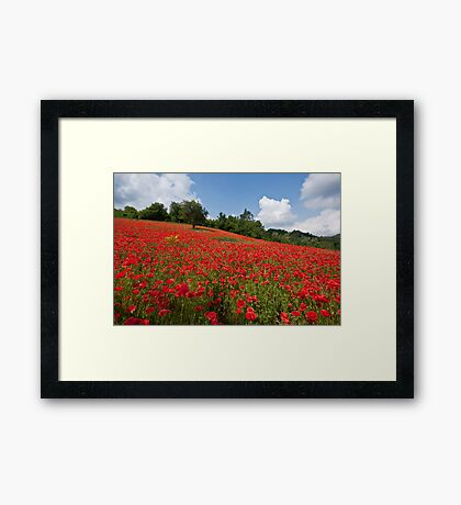 Poppies all over the place Framed Print
