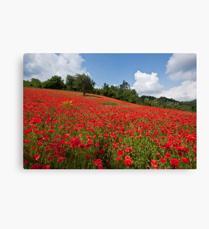 Poppies all over the place Canvas Print