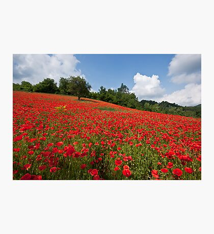 Poppies all over the place Photographic Print
