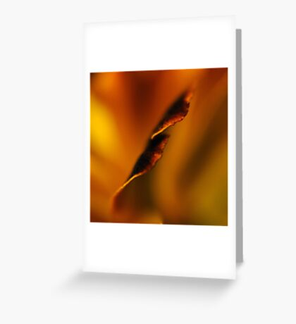 Floral Abstract    XI. Greeting Card