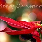 Merry Christmas!! by Mary Trebilco
