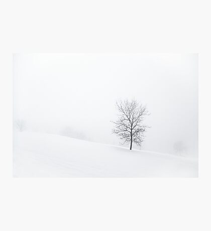 Misty Trees Photographic Print