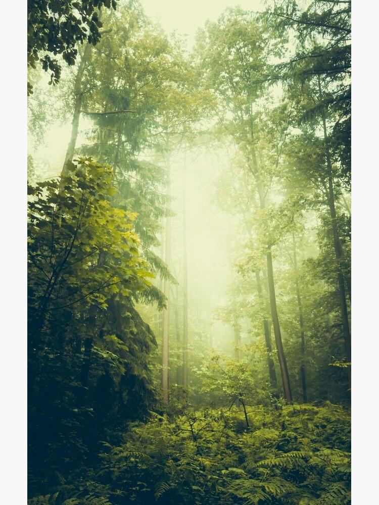 Dreamy Summer Forest by DyrkWyst