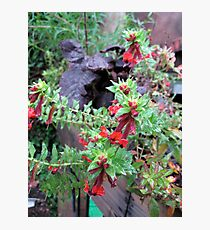 Balck leaves Red Flowers  Photographic Print