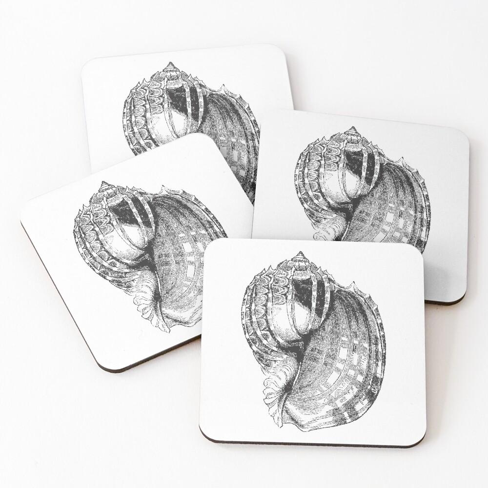 Seashell   Sea Shell   Conch Shell   Vintage Shells   Vintage Seashells   Vintage Sea Shells   Black and White   Coasters (Set of 4)
